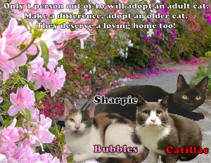 sr cat 2