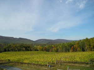 Cedar Creek Vineyard