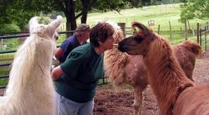 Posey Thisisit Llama Farm