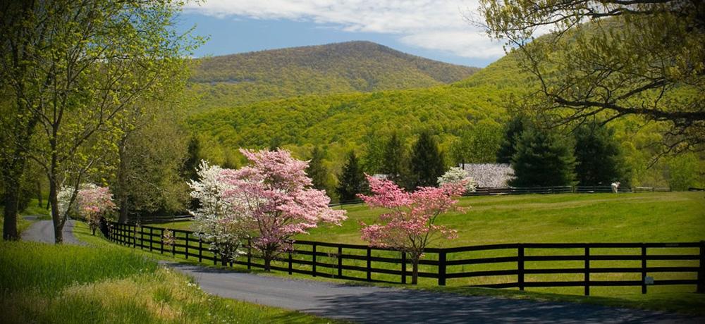 Springtime in Shenandoah